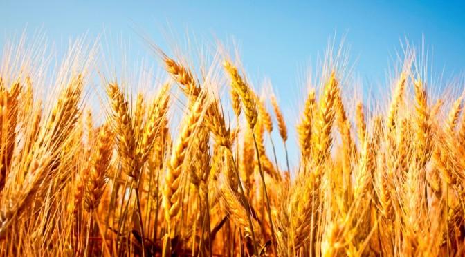 Alimente CARE ARD GRĂSIMEA: Propunerea #3 – Cereale Integrale