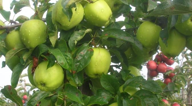 De ce să mănânci mere?