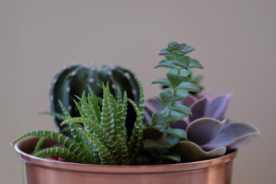 plante-de-apartament